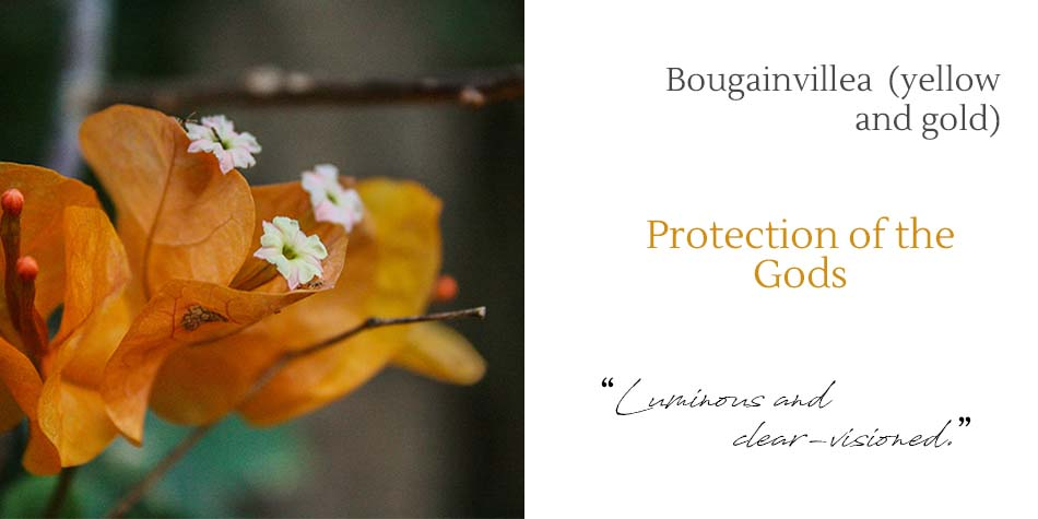 bougainvillea mother protection