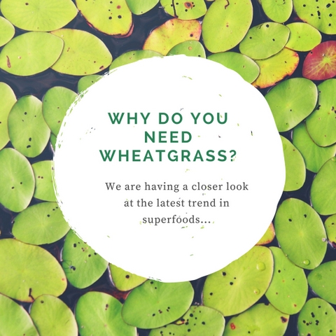 Why you need Wheatgrass