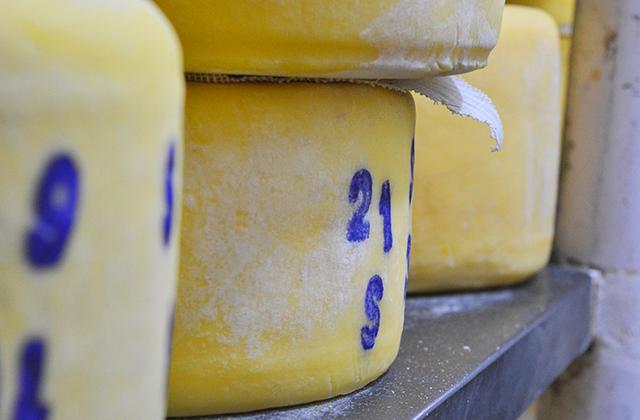 cheese-image