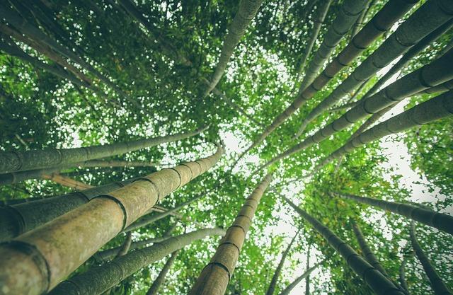 AV Forest 2