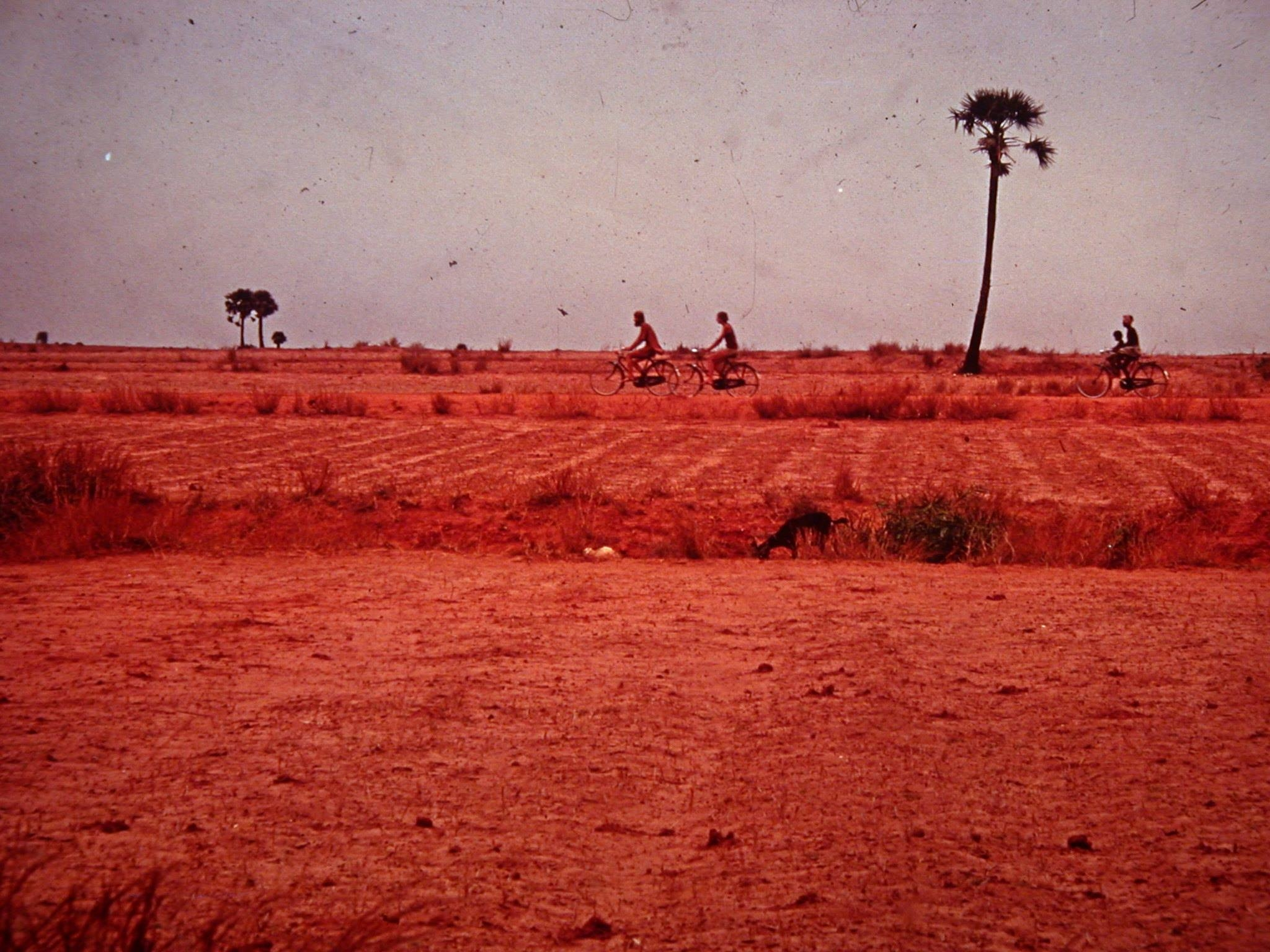 Red earth without trees